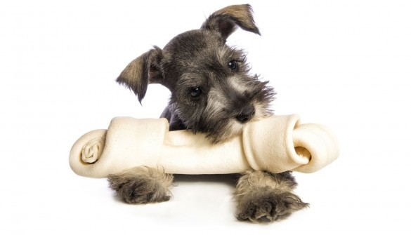 All dogs love to chew, give them the best!